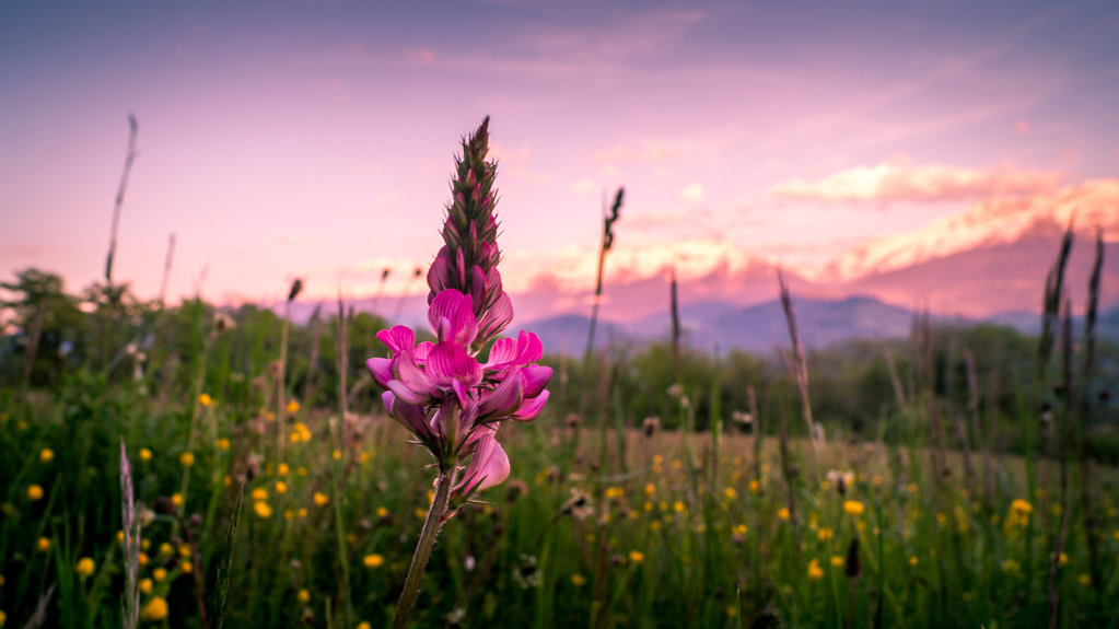 Un soir de printemps à la montagne